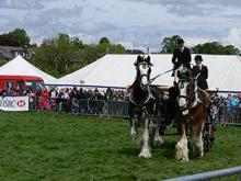 Heavy Horses & Carriage